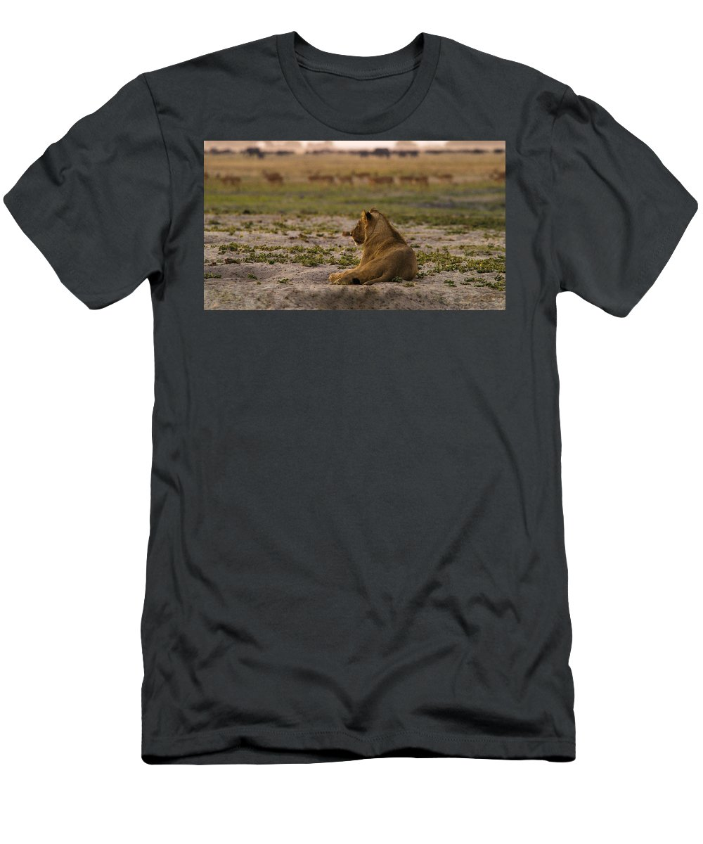 Action Men's T-Shirt (Athletic Fit) featuring the photograph Lion Lazy by Alistair Lyne