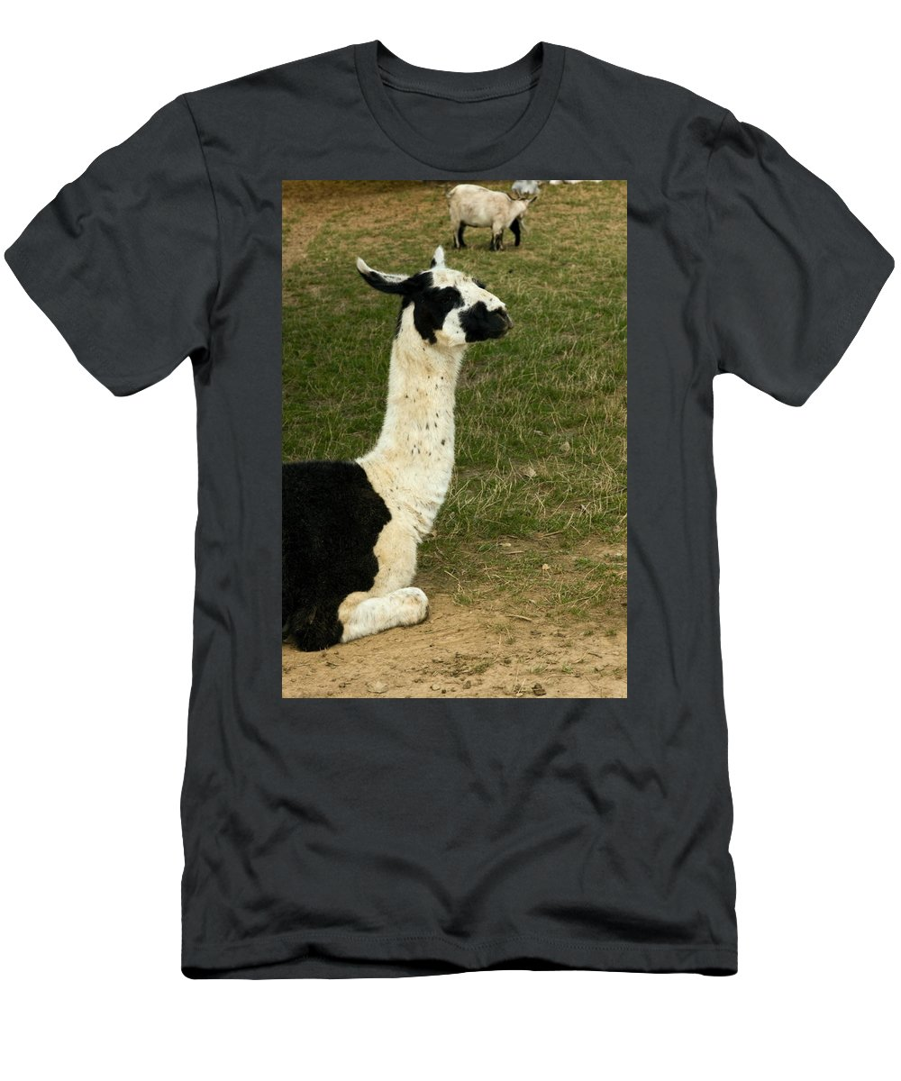 Llama Men's T-Shirt (Athletic Fit) featuring the photograph Llama Portrait by Sally Weigand