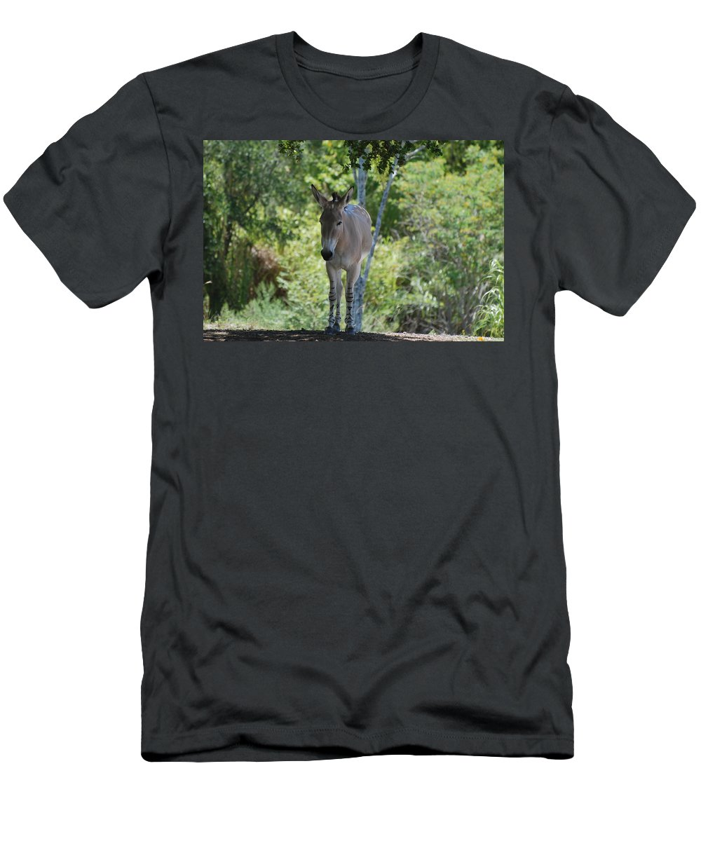 Animal Men's T-Shirt (Athletic Fit) featuring the photograph Lonely by Rob Hans