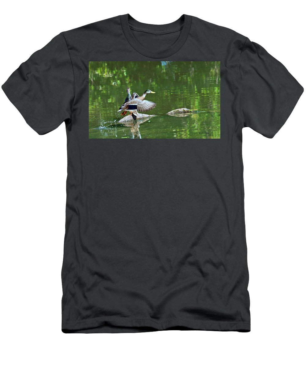 Mallard Men's T-Shirt (Athletic Fit) featuring the photograph Mallards Taking Off by Edward Peterson
