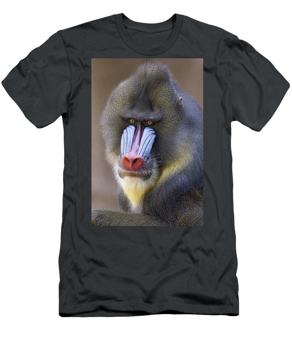 00762452 T-Shirt featuring the photograph Mandrillus Sphinx Portrait by Ingo Arndt