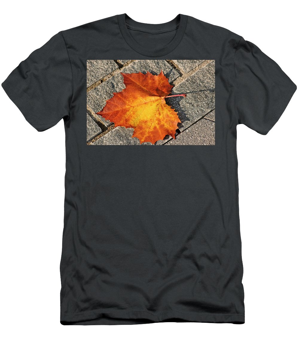 Maple Men's T-Shirt (Athletic Fit) featuring the photograph Maple Leaf In Fall by Carolyn Marshall