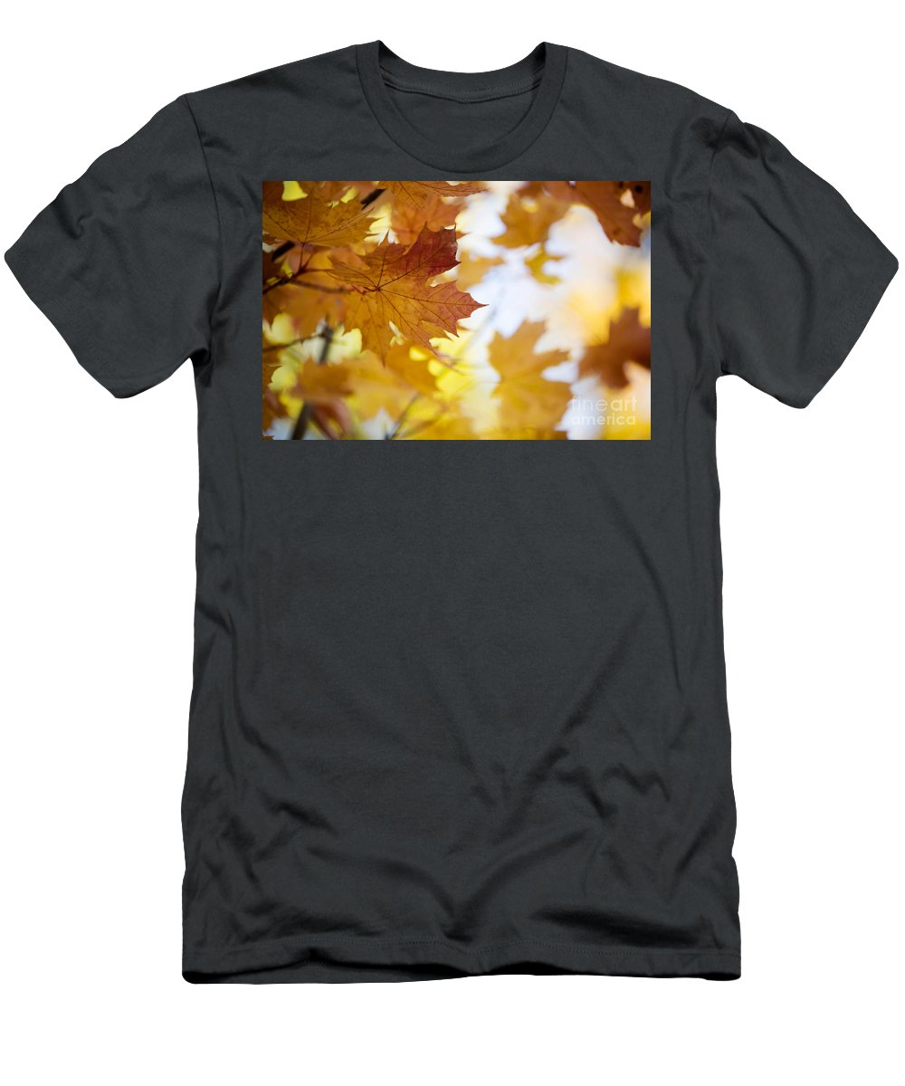 Kamo Men's T-Shirt (Athletic Fit) featuring the photograph Maple Tree In Autumn by Kati Finell
