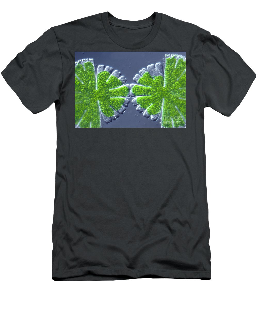 Light Microscopy Men's T-Shirt (Athletic Fit) featuring the photograph Micrasterias Rotata by M. I. Walker