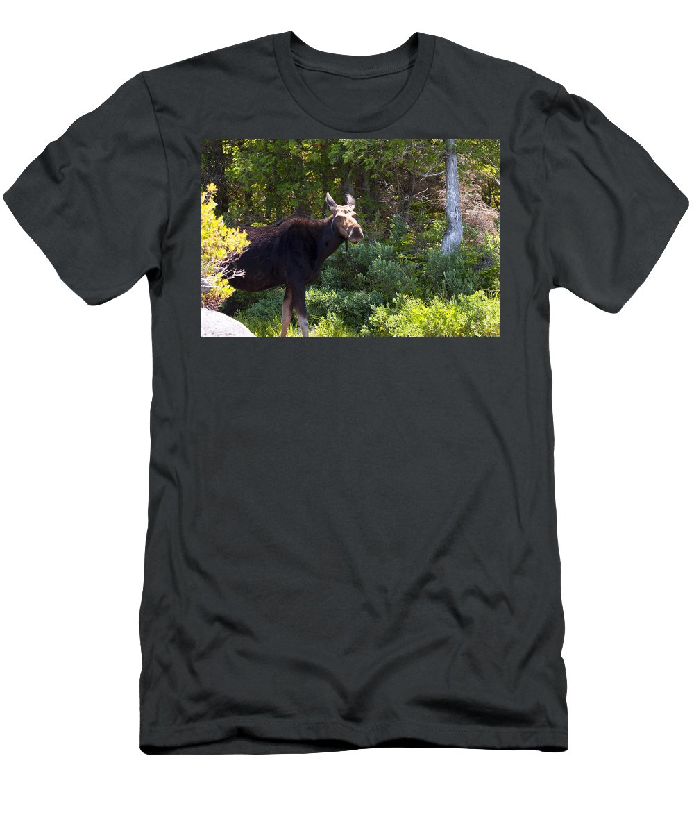 Moose Men's T-Shirt (Athletic Fit) featuring the photograph Moose Baxter State Park 4 by Glenn Gordon