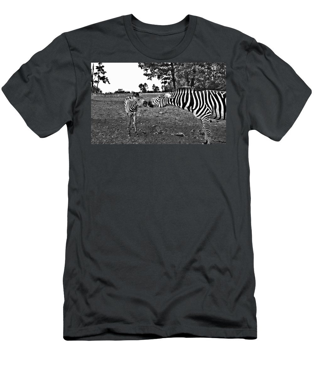 Zebras Men's T-Shirt (Athletic Fit) featuring the photograph Mother And Child-black And White by Douglas Barnard