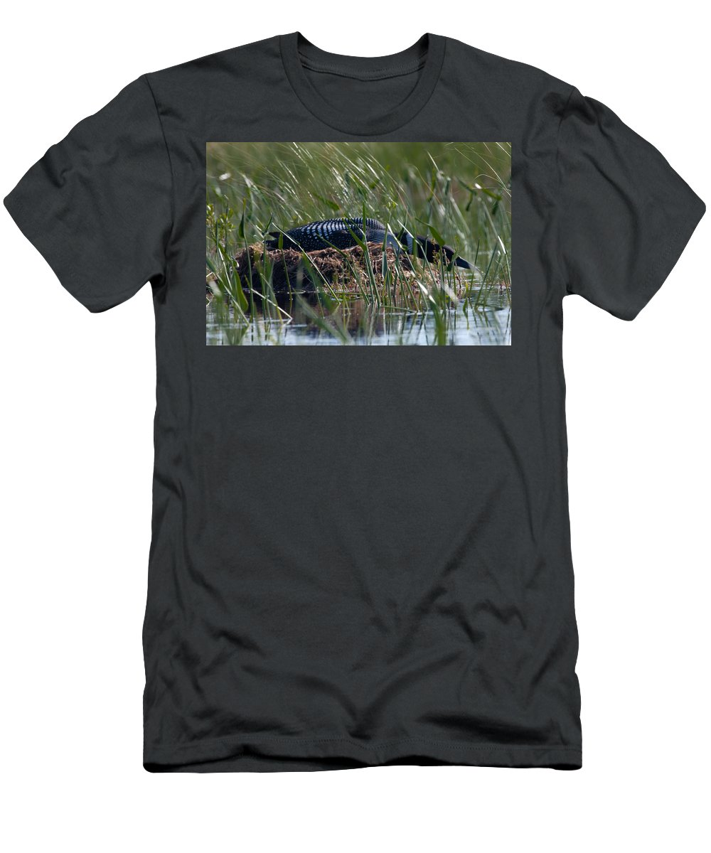 Loon Men's T-Shirt (Athletic Fit) featuring the photograph Nesting Loon by Brent L Ander
