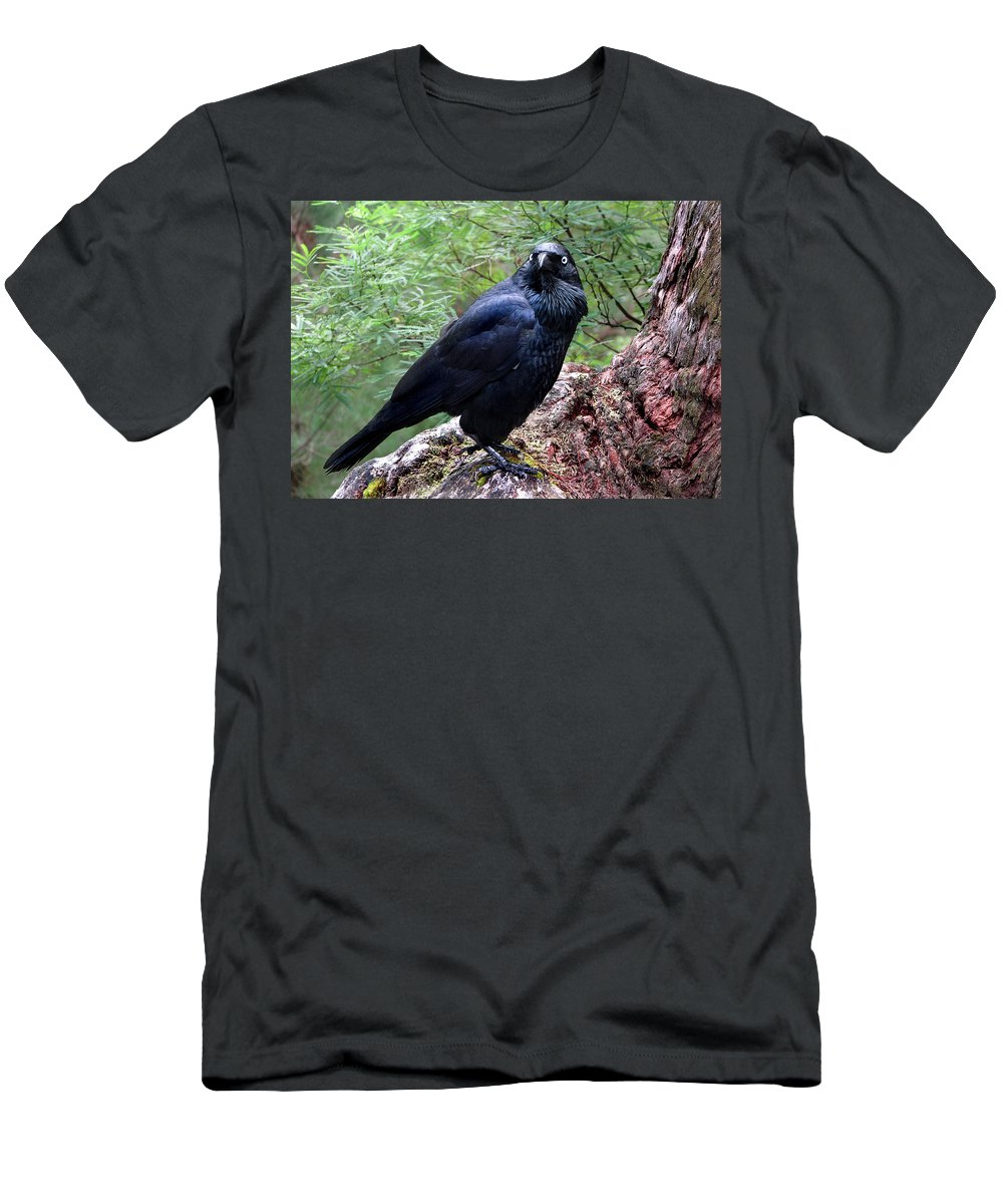 Raven Men's T-Shirt (Athletic Fit) featuring the photograph Nevermore by Michelle Wrighton