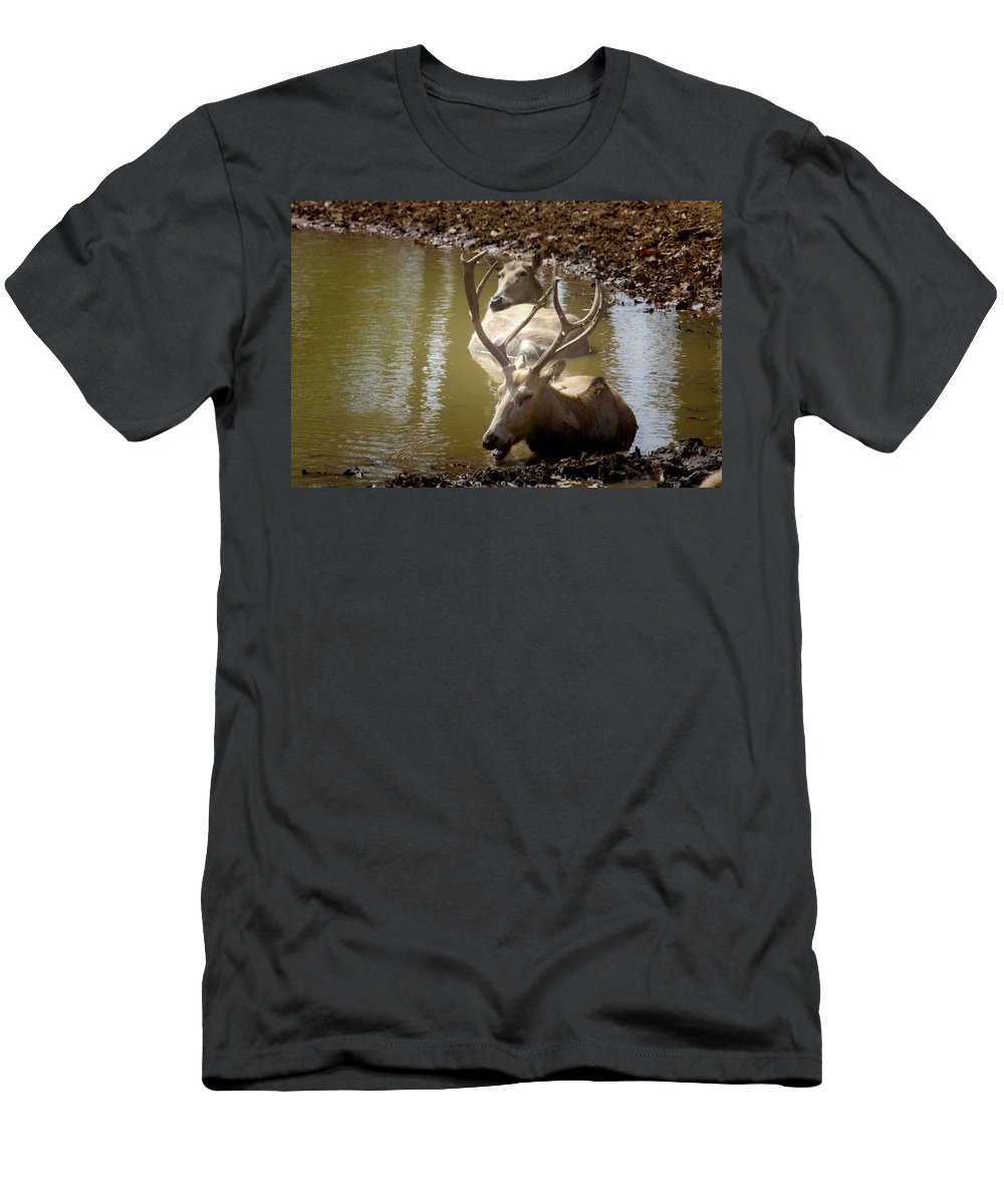 Deer Men's T-Shirt (Athletic Fit) featuring the photograph On A Hot Summers Day by Douglas Barnard