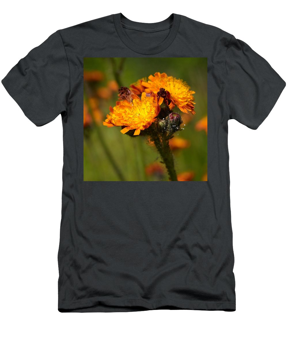 Jouko Lehto Men's T-Shirt (Athletic Fit) featuring the photograph Orange Hawkweed by Jouko Lehto