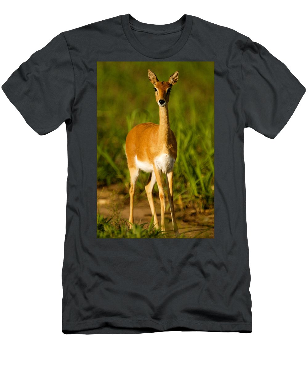 Action Men's T-Shirt (Athletic Fit) featuring the photograph Oribi Ewe by Alistair Lyne