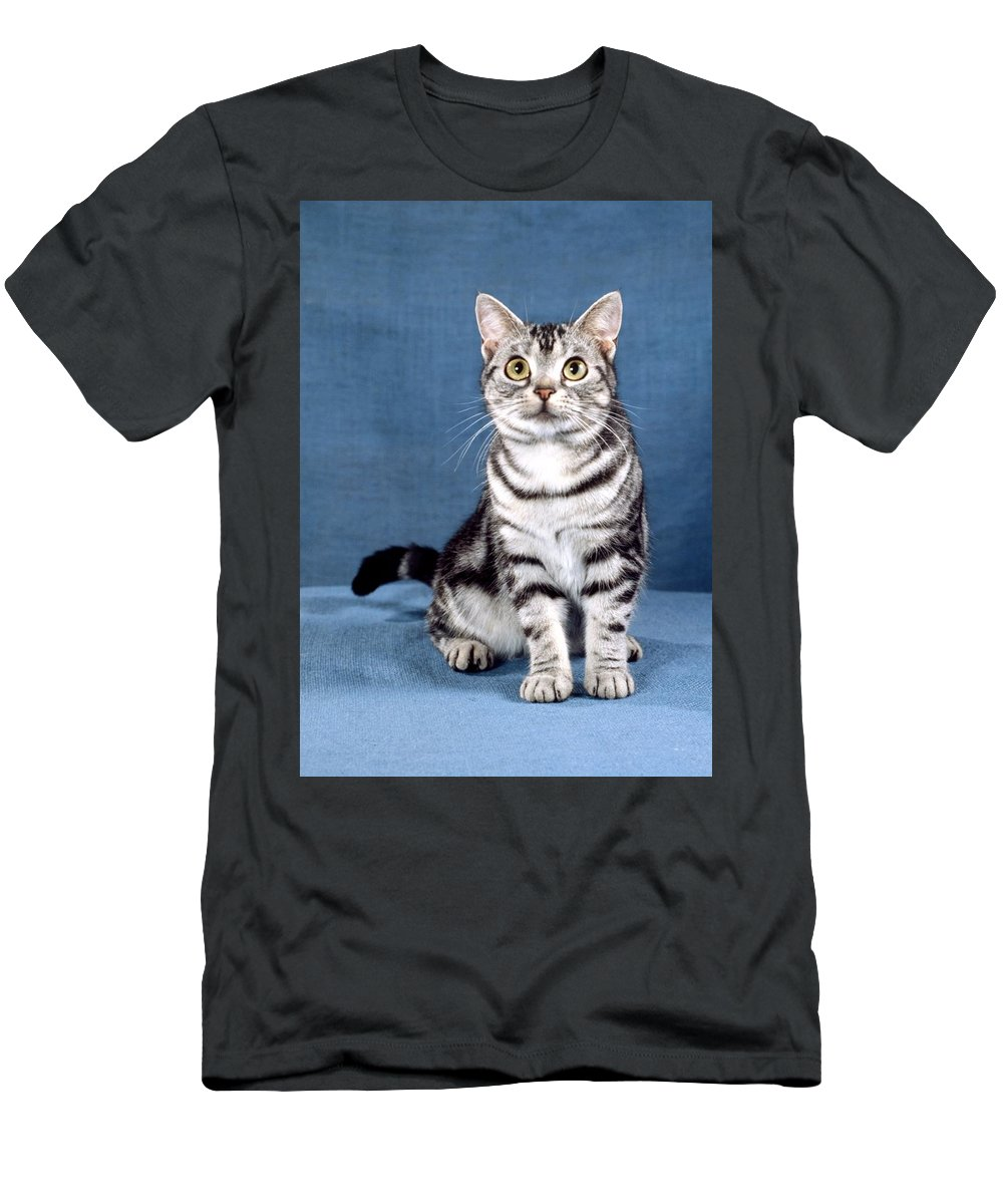 American Shorthair Cat Men's T-Shirt (Athletic Fit) featuring the photograph Outstanding American Shorthair Cat by Larry Allan