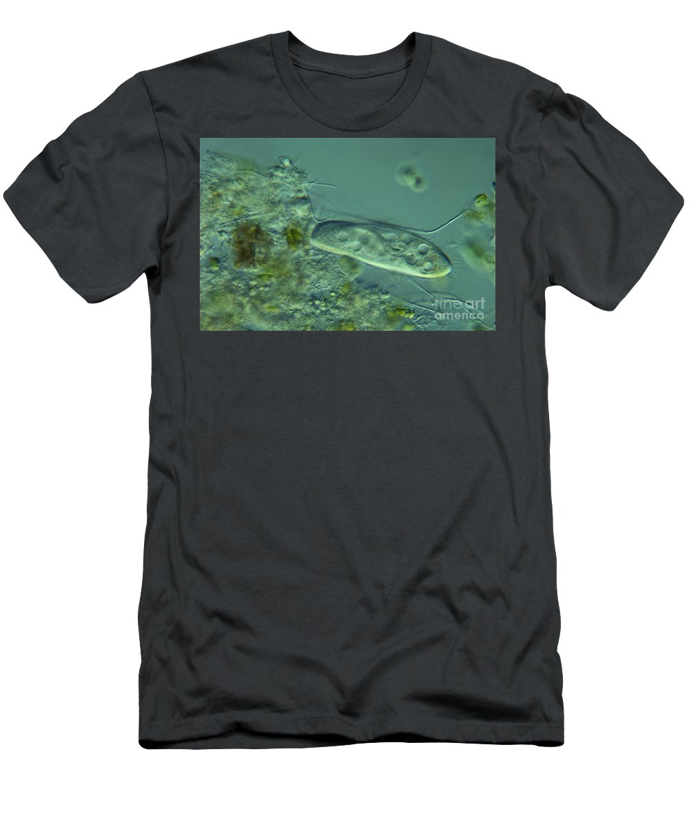 Science Men's T-Shirt (Athletic Fit) featuring the photograph Paramecium Feeding Lm by M. I. Walker