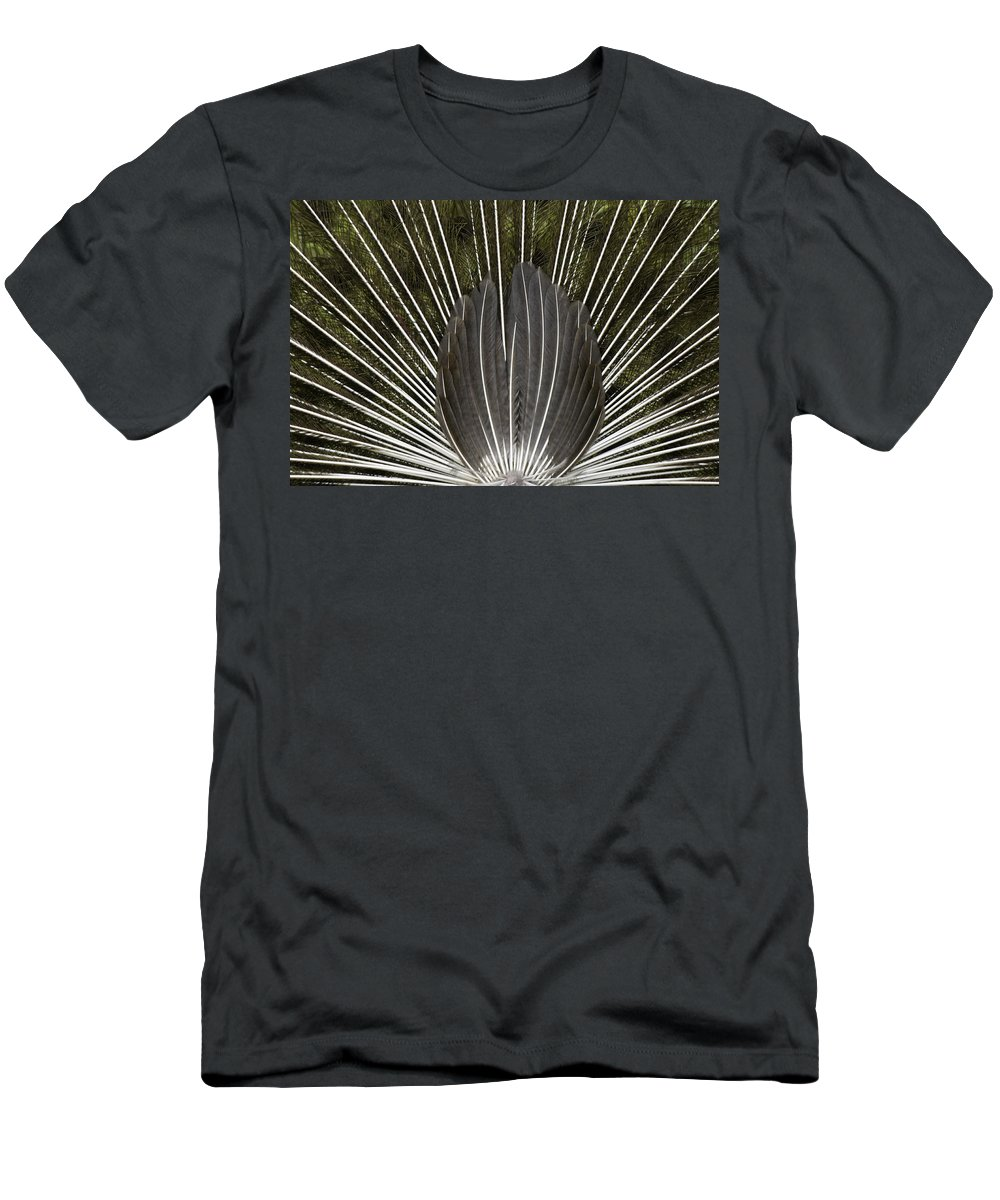 Asia Men's T-Shirt (Athletic Fit) featuring the photograph Peacock Tail Graphic by Michele Burgess