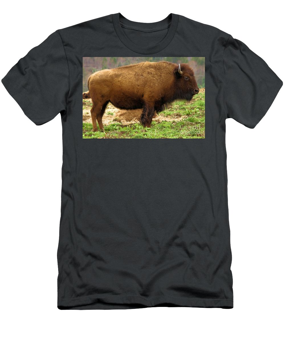 Bison Men's T-Shirt (Athletic Fit) featuring the photograph Pennsylvania Bison by Adam Jewell