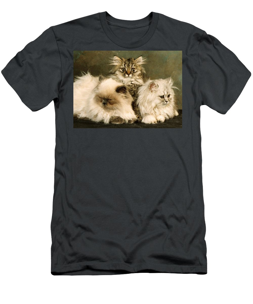 Persian Cats Men's T-Shirt (Athletic Fit) featuring the photograph Persian Kittens 2 by Larry Allan
