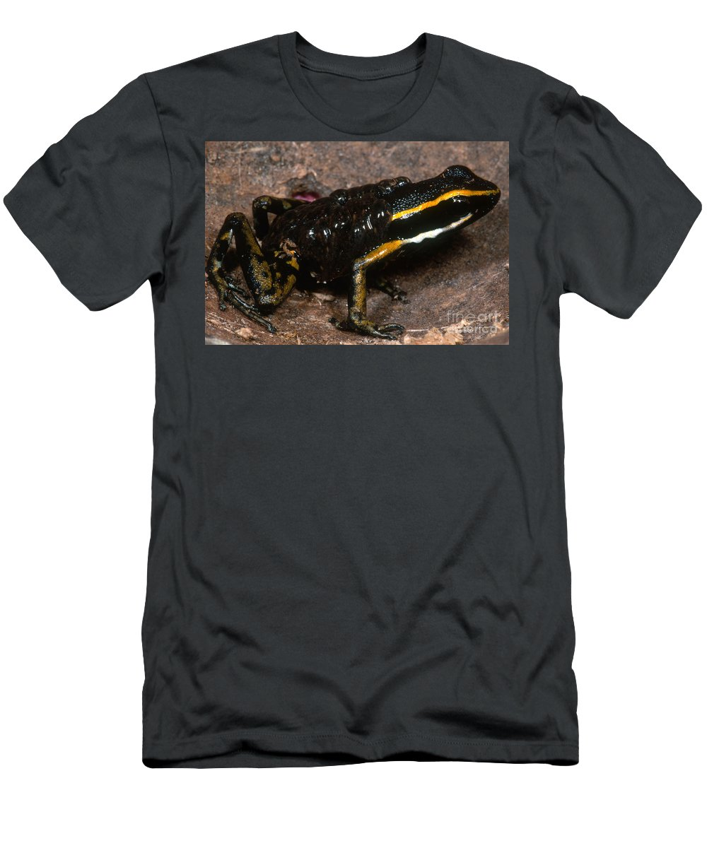 Three Stripe Poison Frog Men's T-Shirt (Athletic Fit) featuring the photograph Poison Arrow Frog With Tadpoles by Dante Fenolio