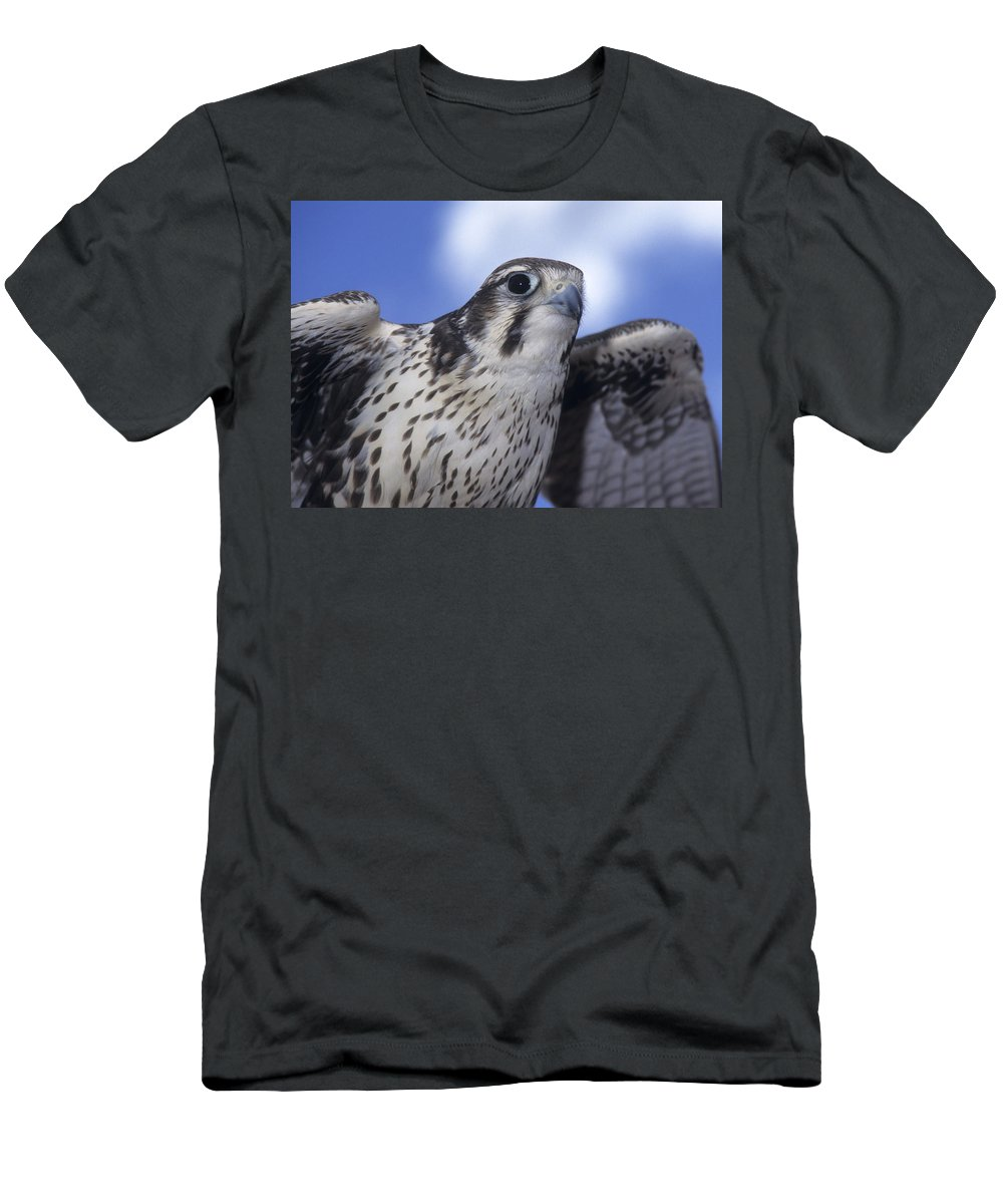 Prairie Falcon Men's T-Shirt (Athletic Fit) featuring the photograph Prairie Falcon In Flight by Larry Allan