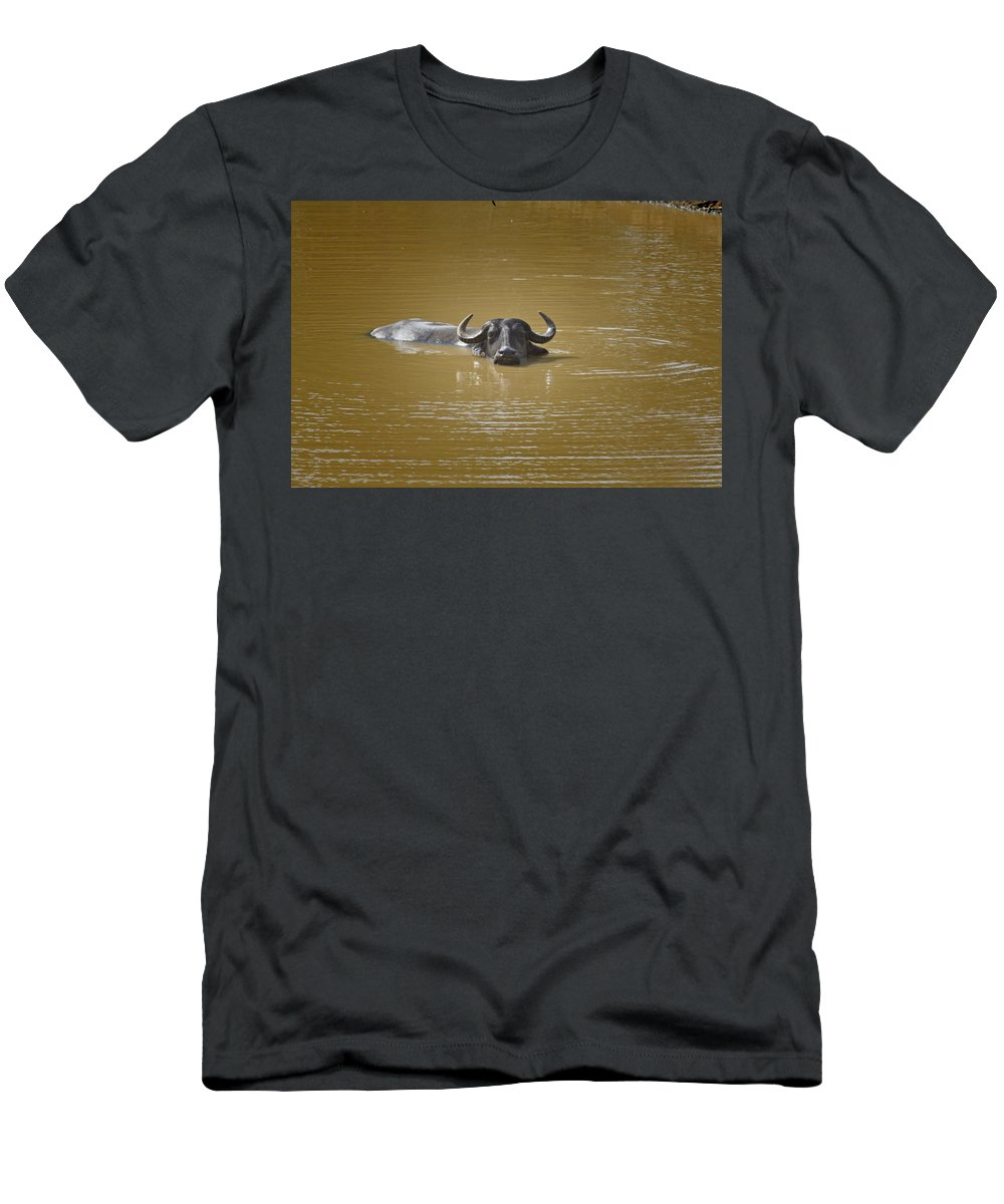 Water Buffalo Men's T-Shirt (Athletic Fit) featuring the photograph Preferred Environment by Douglas Barnard