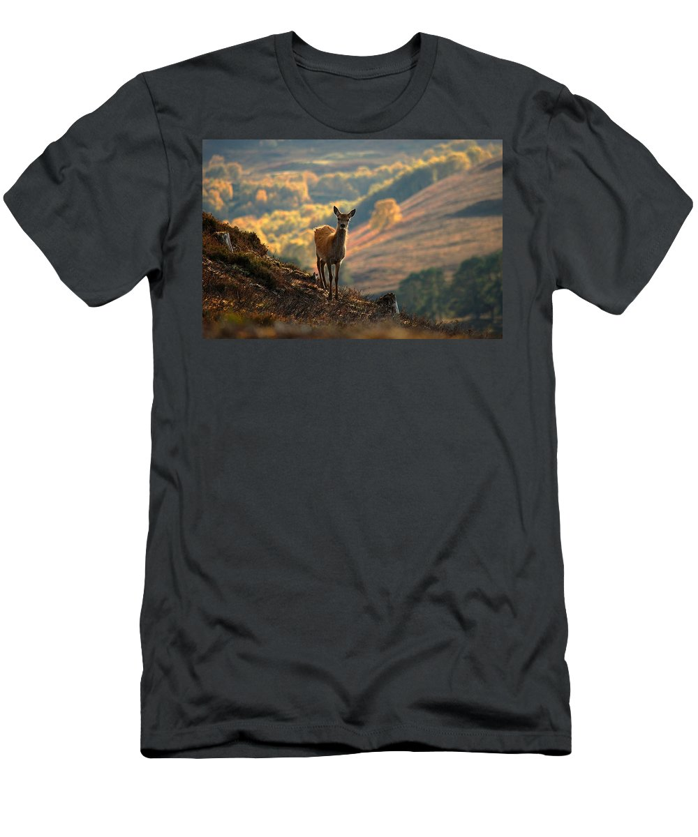Red Deer Calf Men's T-Shirt (Athletic Fit) featuring the photograph Red Deer Calf by Gavin Macrae
