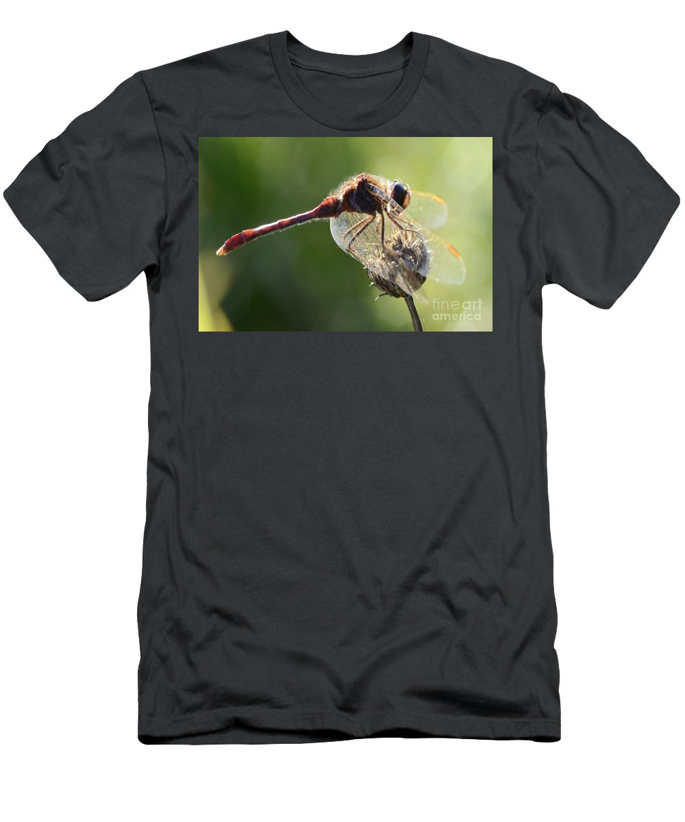 Red Dragonfly Men's T-Shirt (Athletic Fit) featuring the photograph Red Dragonfly by Bob Christopher