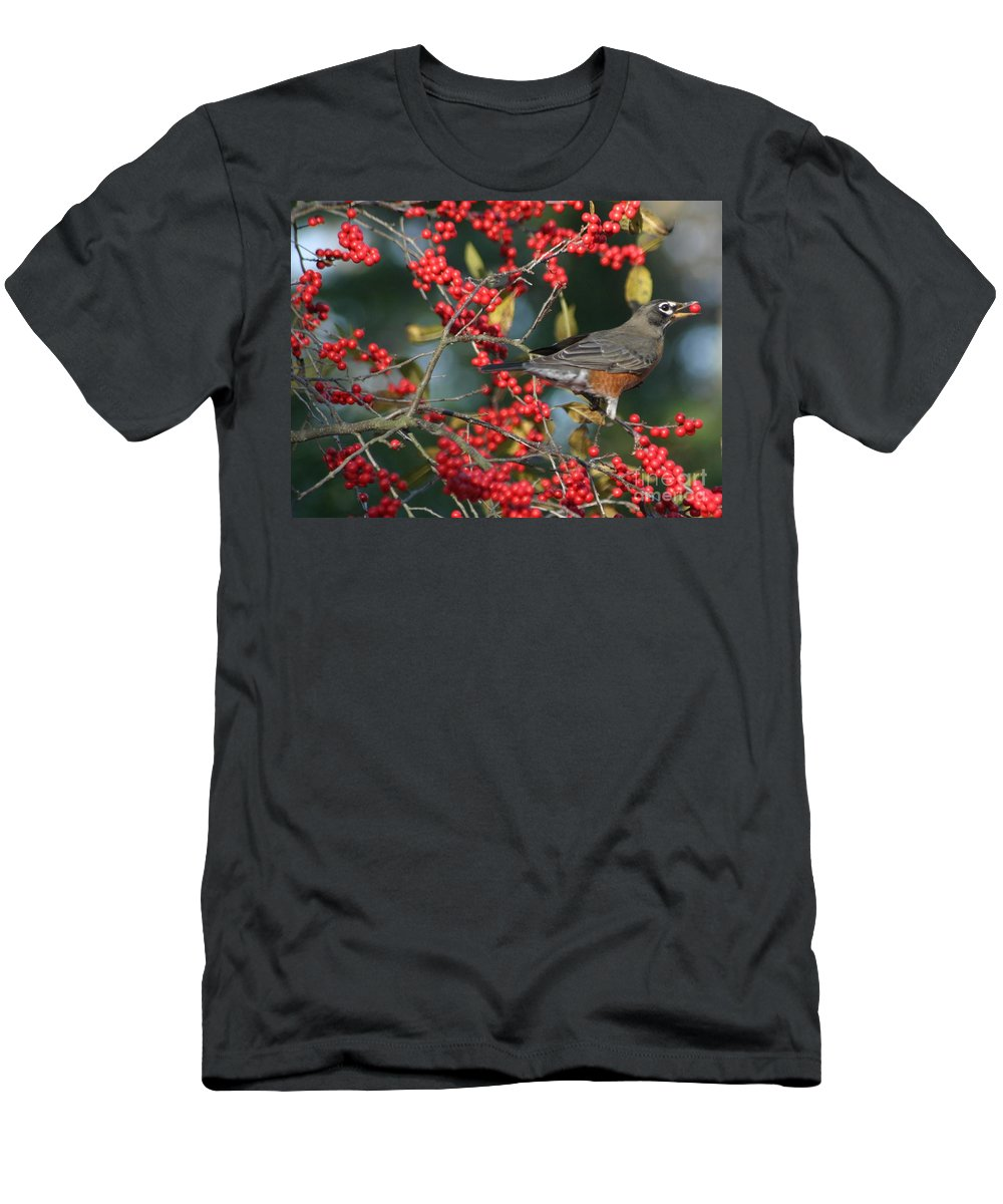 Birds Men's T-Shirt (Athletic Fit) featuring the photograph Red Robin by Living Color Photography Lorraine Lynch
