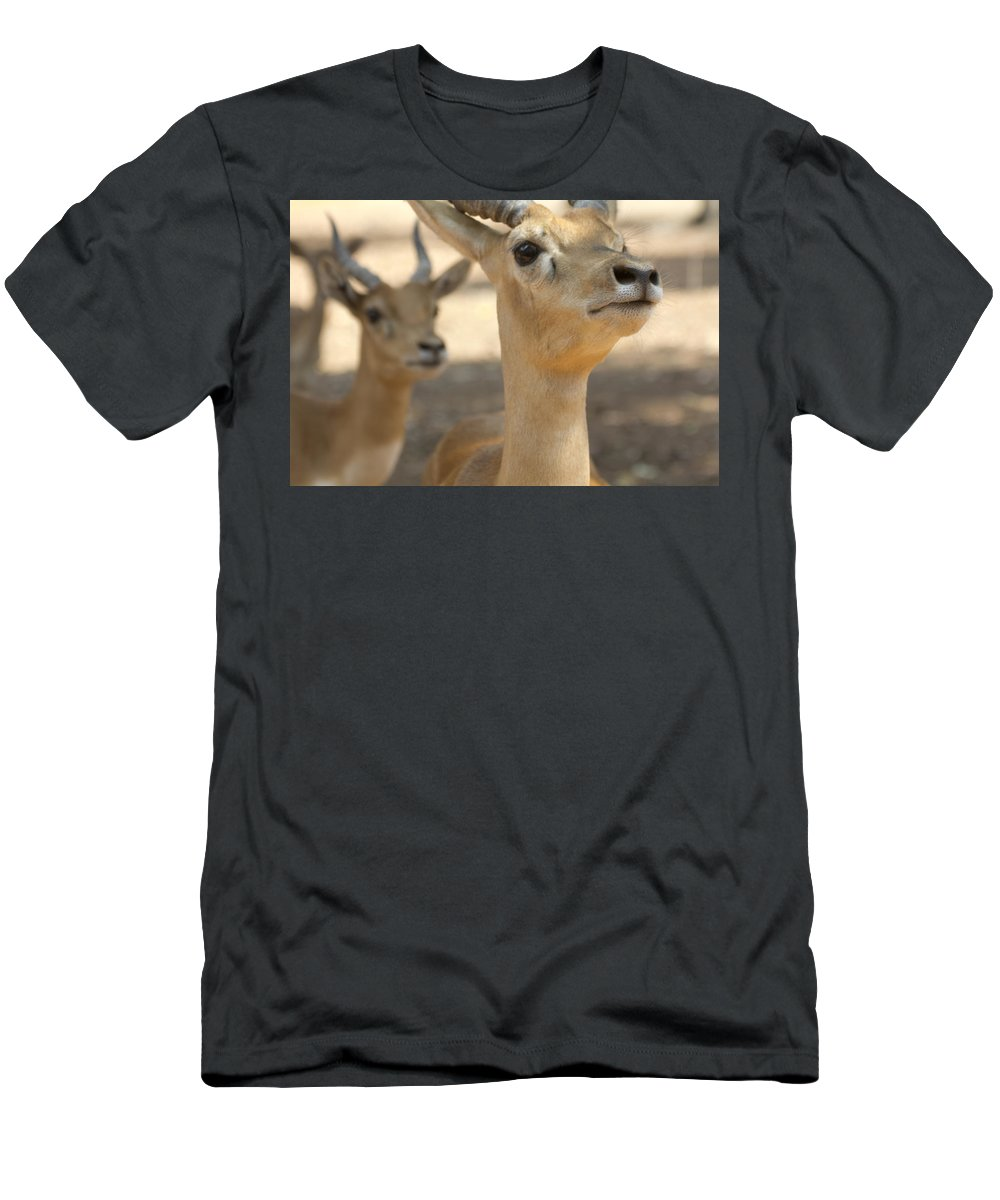 Impala Men's T-Shirt (Athletic Fit) featuring the photograph Right Over There by Douglas Barnard