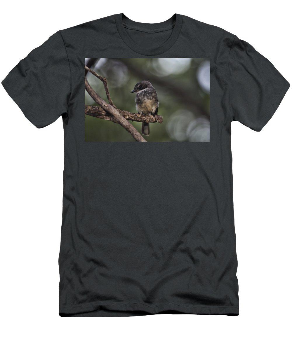 Robin T-Shirt featuring the photograph Robin Top-End Australia by Douglas Barnard
