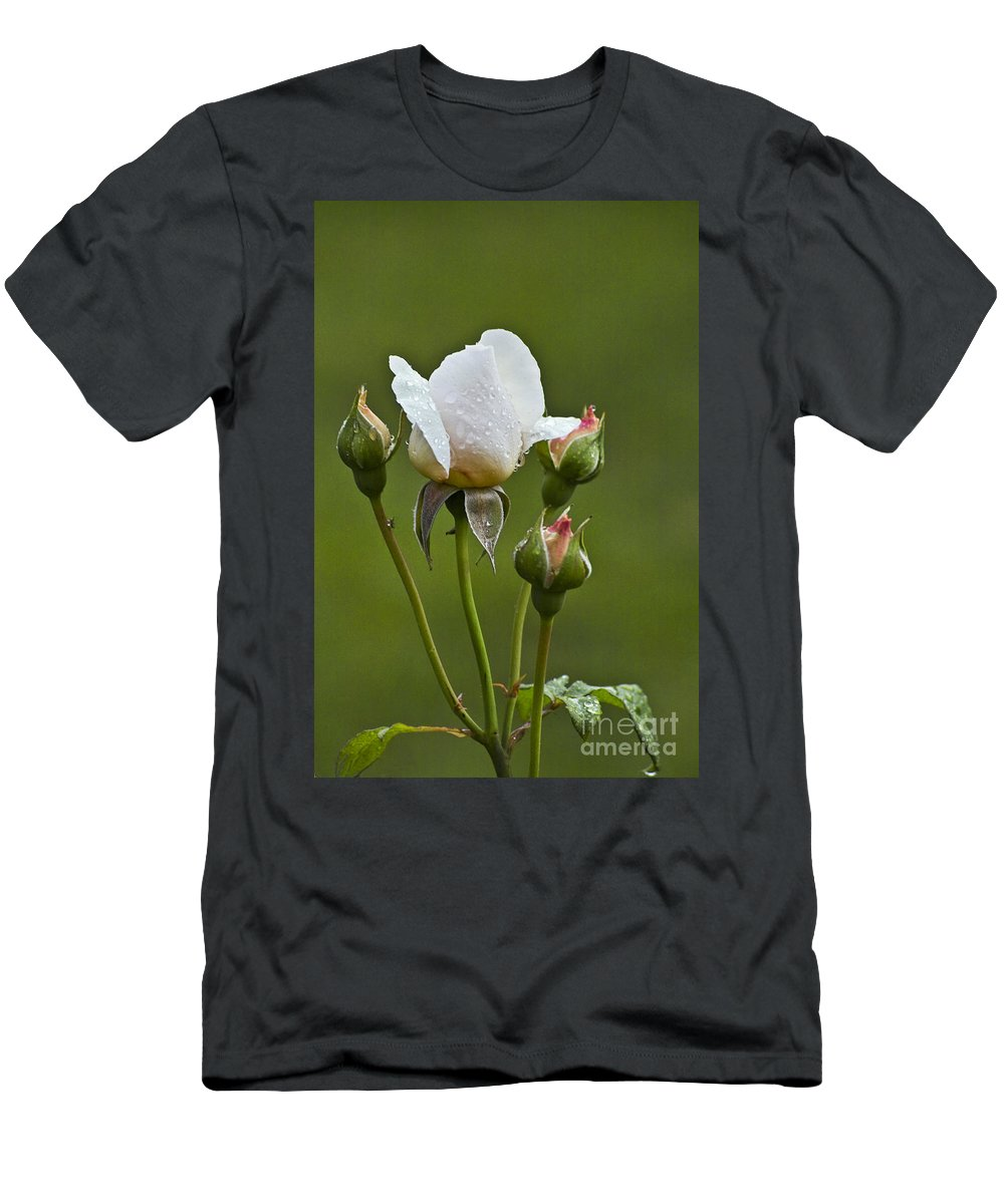Rose T-Shirt featuring the photograph Rose Flower Series 6 by Heiko Koehrer-Wagner