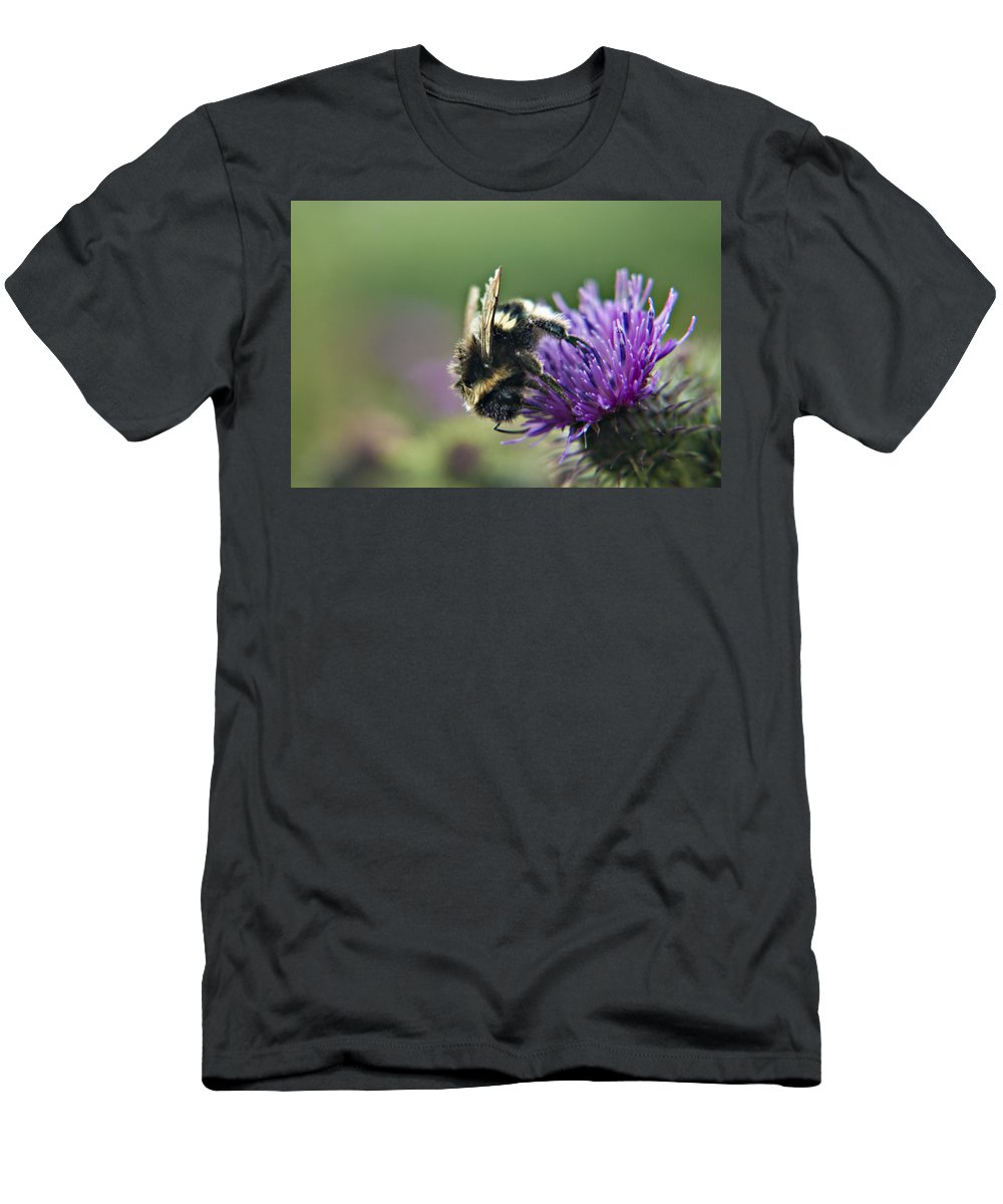 Bee Men's T-Shirt (Athletic Fit) featuring the photograph Scrufy Old Bee by Vicki Field