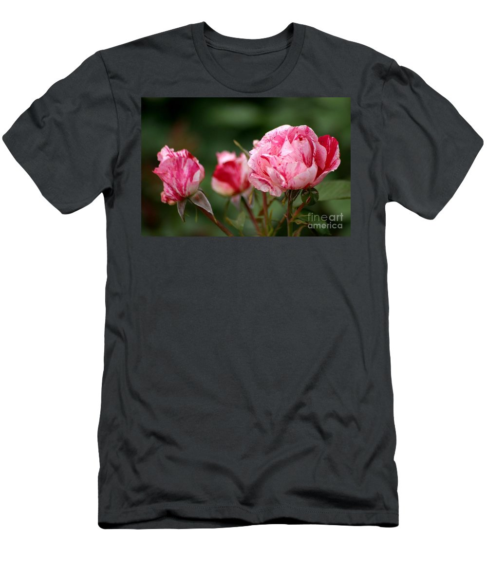 Rose Men's T-Shirt (Athletic Fit) featuring the photograph Sentimental Rose by Living Color Photography Lorraine Lynch
