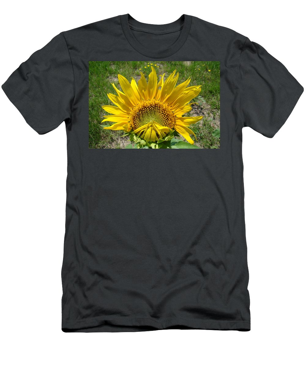 Sunflower Men's T-Shirt (Athletic Fit) featuring the photograph Shy Sunflower by Michael MacGregor