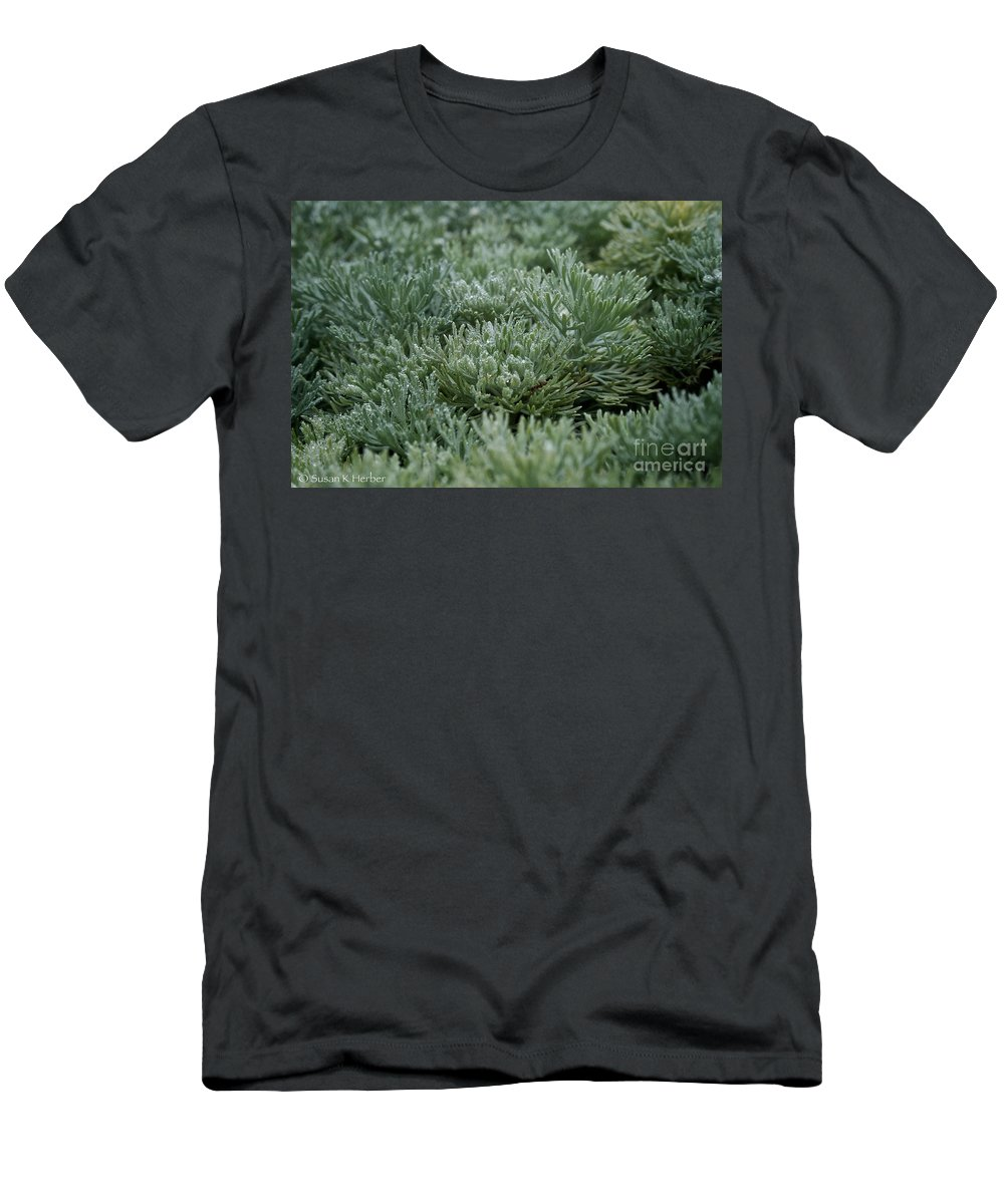 Plant Men's T-Shirt (Athletic Fit) featuring the photograph Silver Mound Dew Drenched by Susan Herber