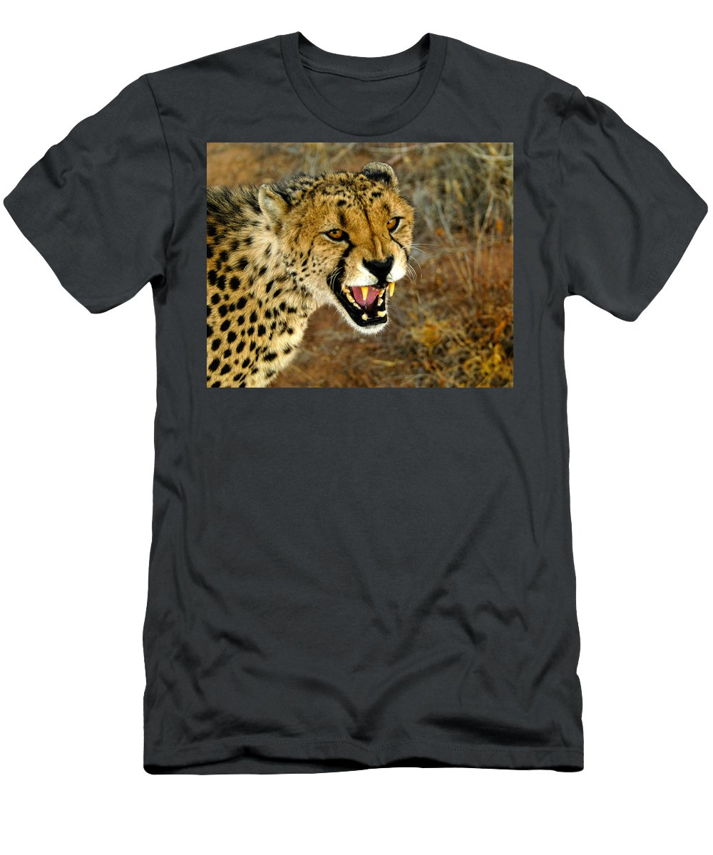 Acinonyx Jubatus Men's T-Shirt (Athletic Fit) featuring the photograph Snarl by Alistair Lyne