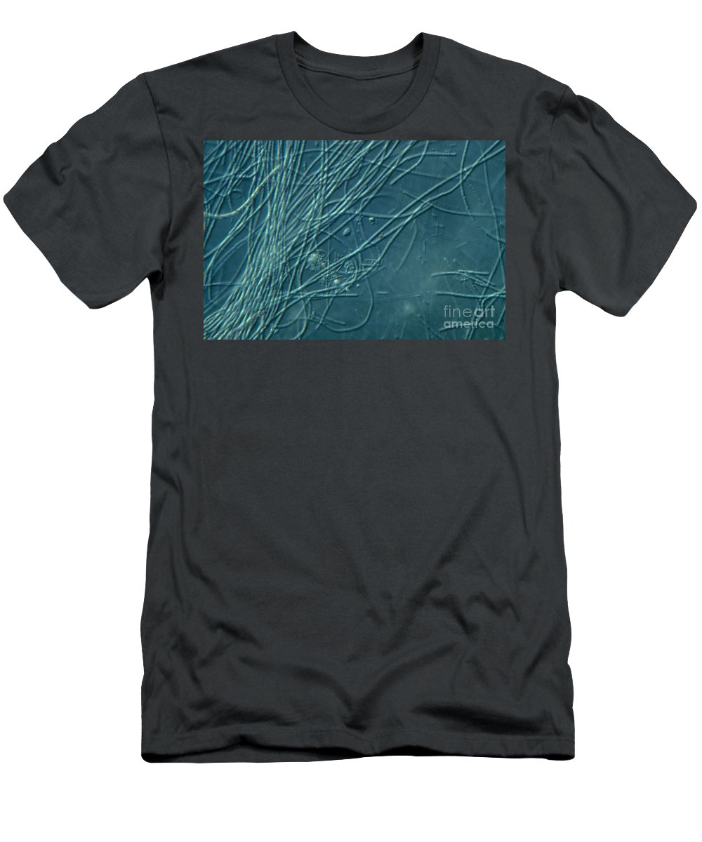 Bacteria Men's T-Shirt (Athletic Fit) featuring the photograph Sphaerotilus Bacteria by M. I. Walker