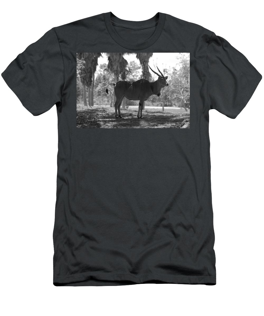 Animal Men's T-Shirt (Athletic Fit) featuring the photograph Standing Tall In Black And White by Rob Hans