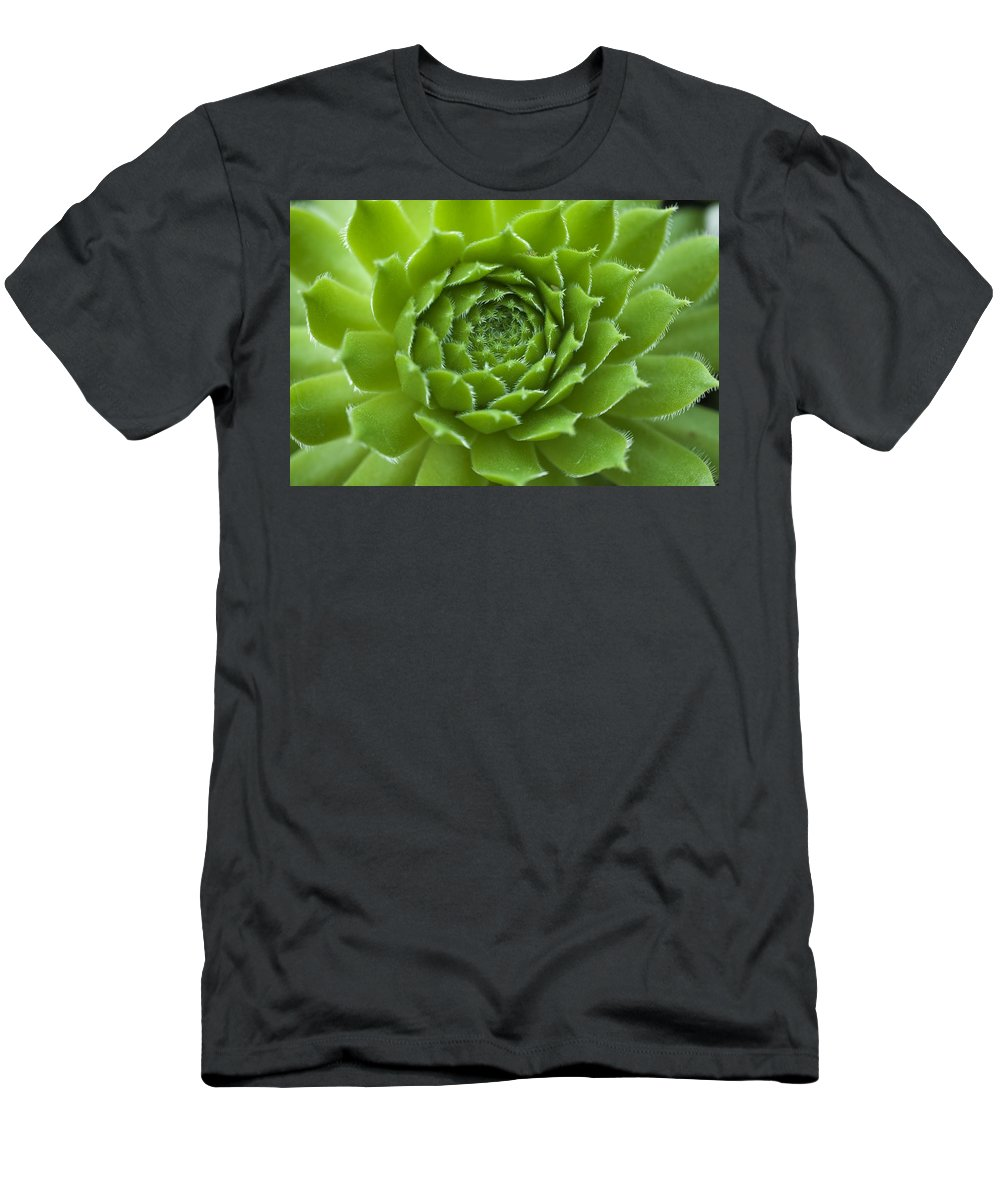 Black Background Men's T-Shirt (Athletic Fit) featuring the photograph Succulent by David Chapman