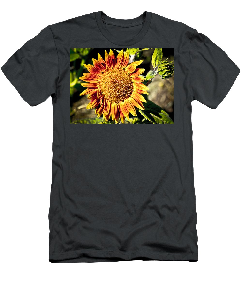 Sunflower Men's T-Shirt (Athletic Fit) featuring the photograph Sunflower And Bud by Steve McKinzie