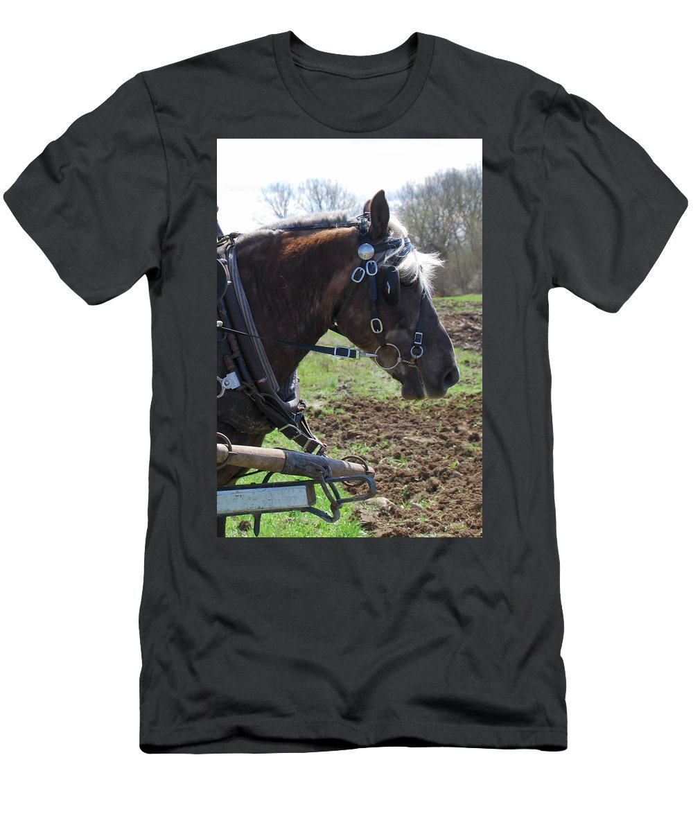 Horse Men's T-Shirt (Athletic Fit) featuring the photograph Sunlit 1404a by Guy Whiteley