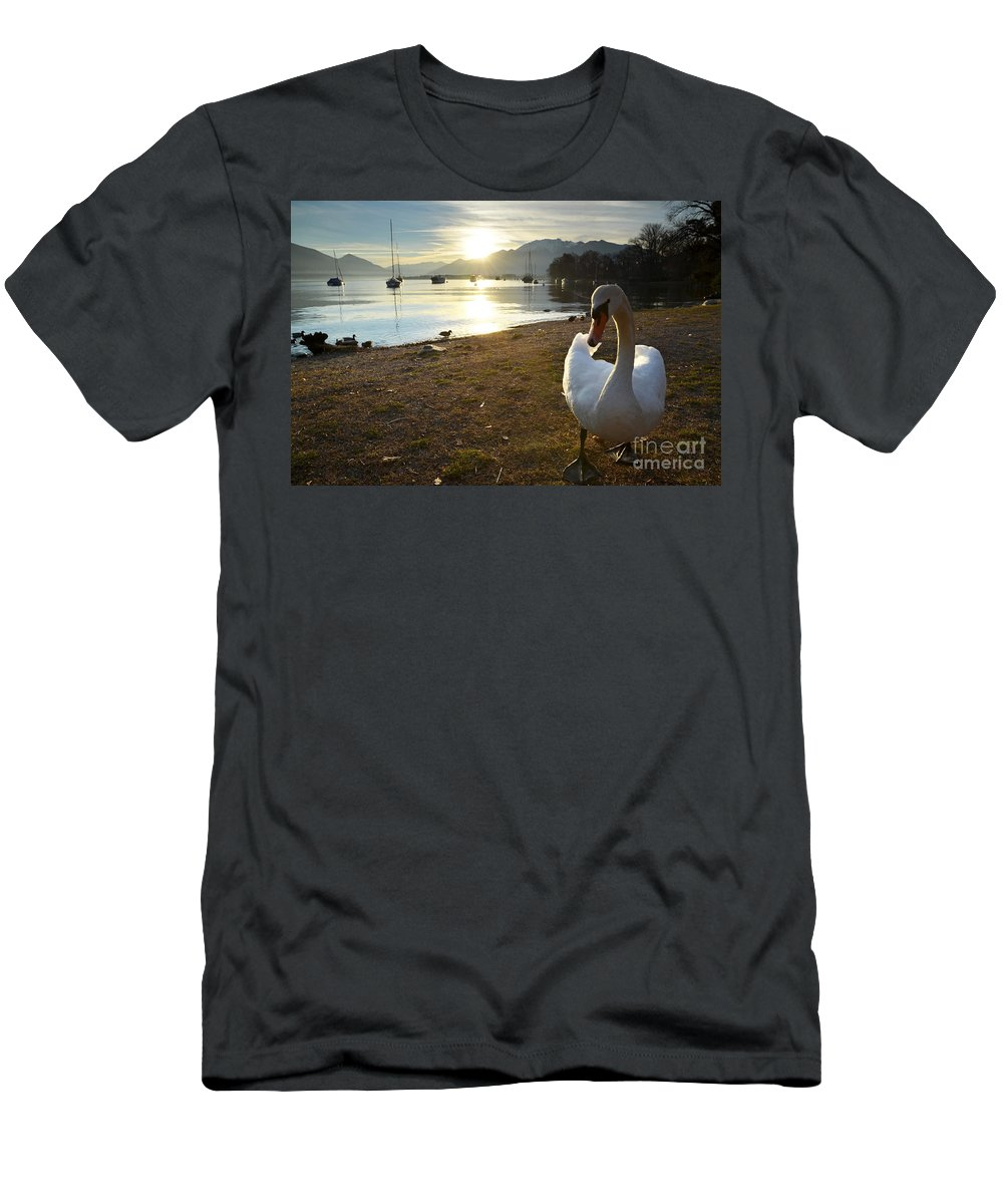 Swan Men's T-Shirt (Athletic Fit) featuring the photograph Swan On The Beach by Mats Silvan