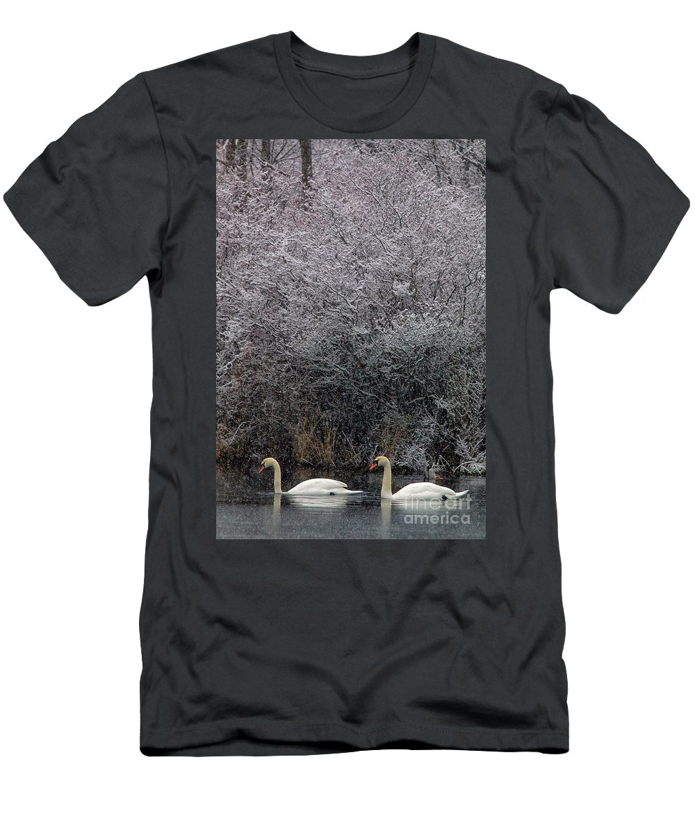 Winter Men's T-Shirt (Athletic Fit) featuring the photograph Swans At Mill Pond Yarmouth On Cape Cod by Matt Suess