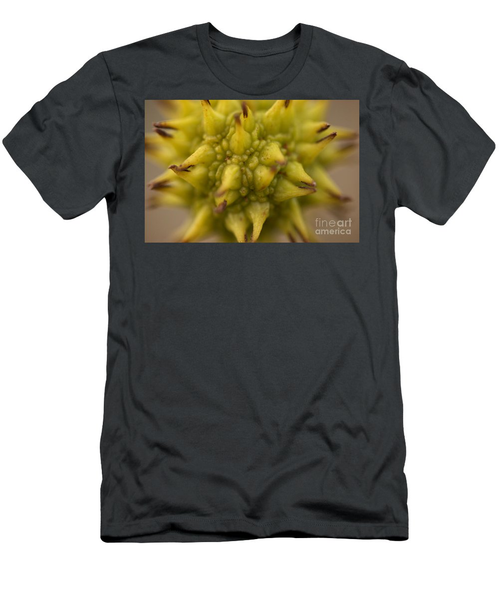 Sycamore Tree Men's T-Shirt (Athletic Fit) featuring the photograph Sycamore Seed Pod by Brooke Roby