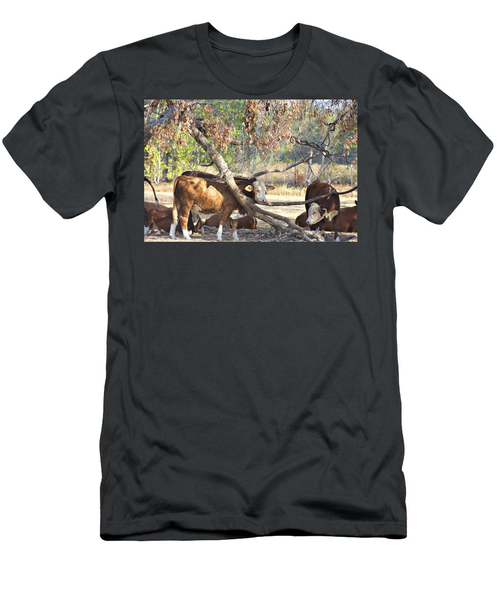 Cattle Men's T-Shirt (Athletic Fit) featuring the photograph The Fork In The Tree by Douglas Barnard