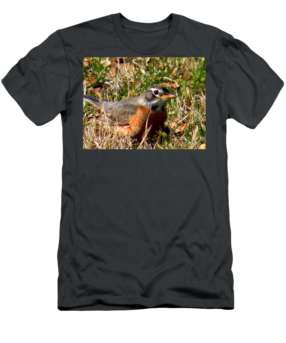 Robin Men's T-Shirt (Athletic Fit) featuring the photograph The Robin Stare by Kathy White