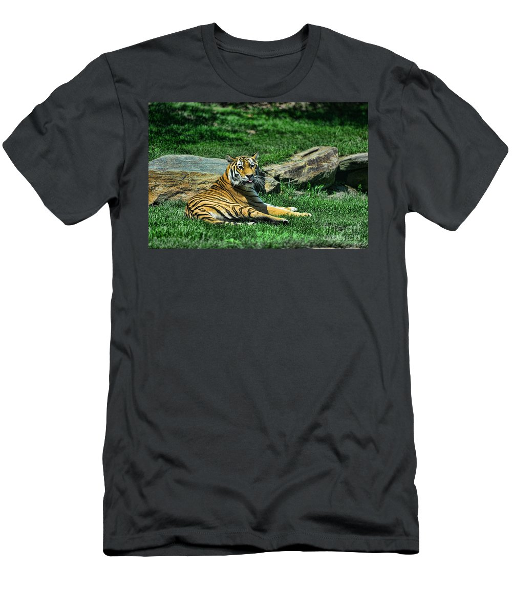 Tiger Men's T-Shirt (Athletic Fit) featuring the photograph Tiger - Endangered - Lying Down - Tongue Out by Paul Ward
