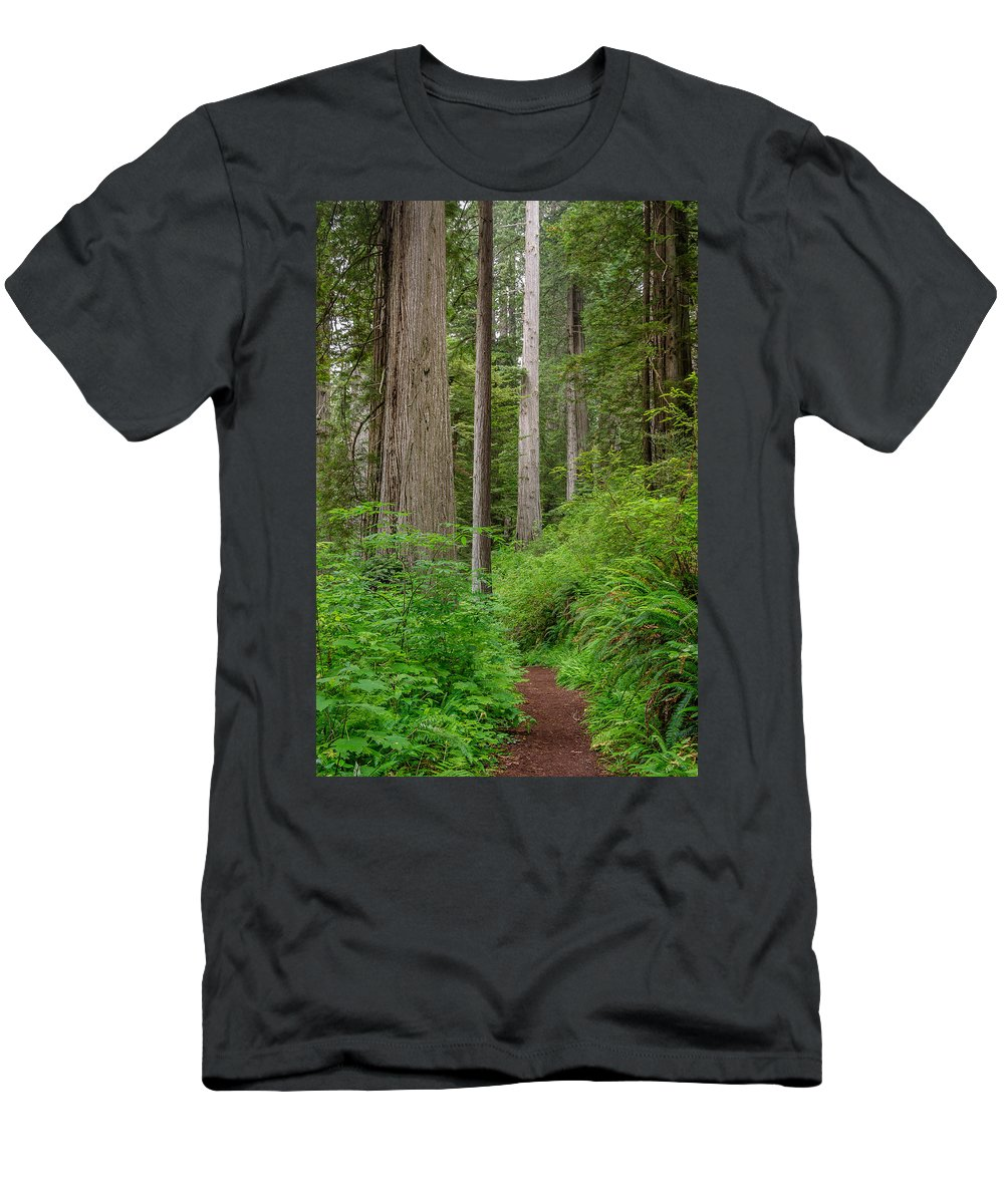 Redwoods Men's T-Shirt (Athletic Fit) featuring the photograph Trail Through Redwoods by Greg Nyquist