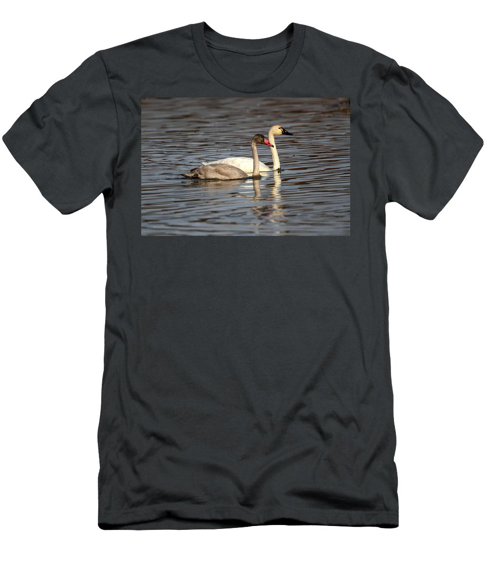 Doug Lloyd Men's T-Shirt (Athletic Fit) featuring the photograph Tundra Swan And Cygnet by Doug Lloyd