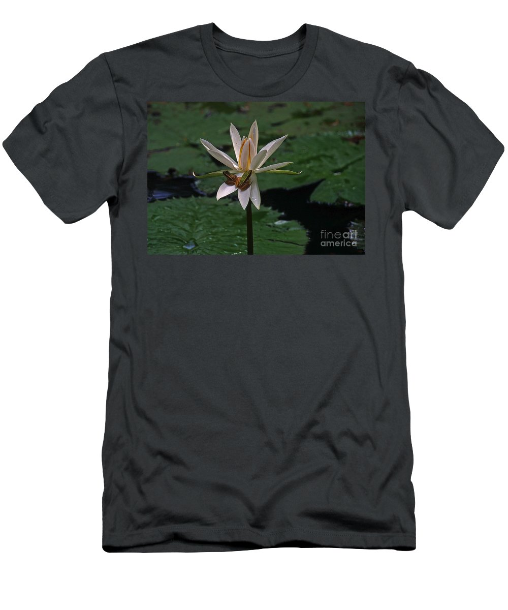 Vietnam Men's T-Shirt (Athletic Fit) featuring the photograph Two Frogs Sharing A Lotus by Rich Walter
