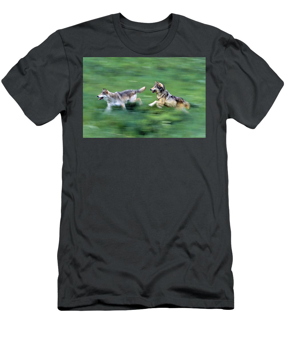Outdoors Men's T-Shirt (Athletic Fit) featuring the photograph Two Wolves Running Through Meadow by Natural Selection David Ponton