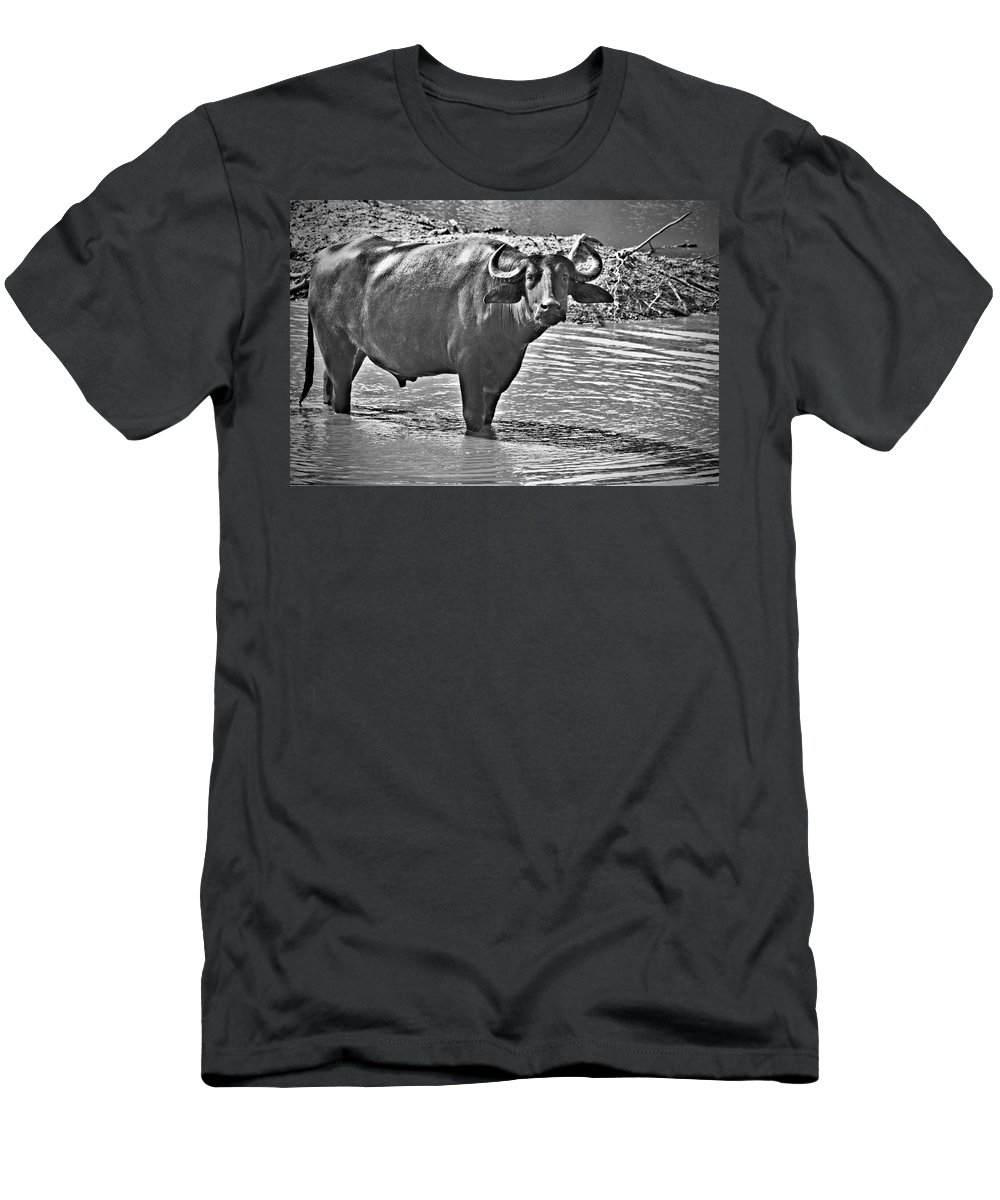 Water Buffalo In Black And White Men's T-Shirt (Athletic Fit) featuring the photograph Water Buffalo In Black And White by Douglas Barnard
